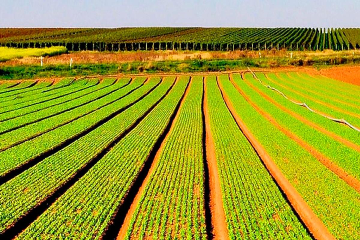 Resultado de imagen para campo agricola sembrado