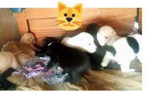 cachorros adopcion3
