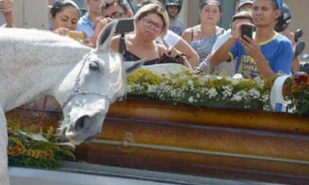 caballo-llora