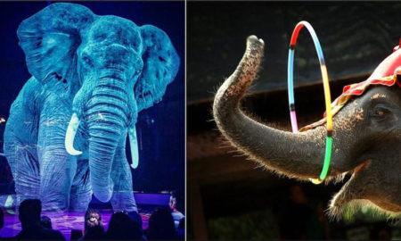 circo roncalli animales holográficos