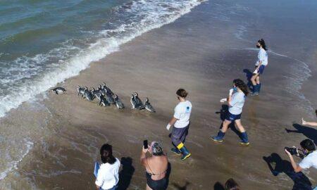 pinguinos vuelven al mar